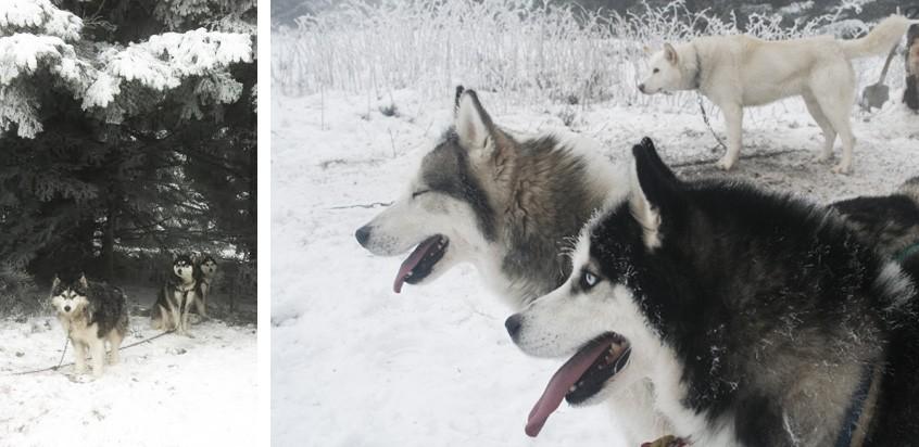 chiens-col-de-la-loge