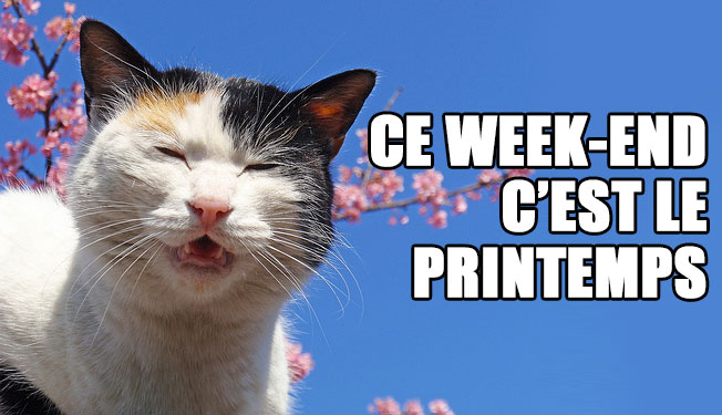 spring-cat