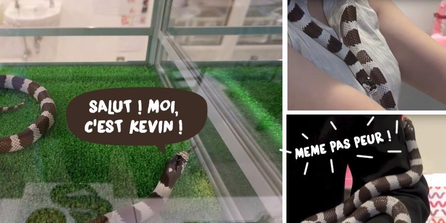Kevin-Snake