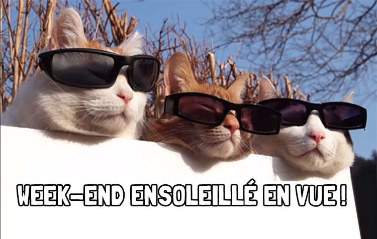 Cat-soleil