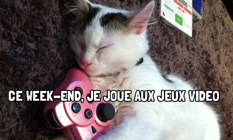 Lolcat-video-games