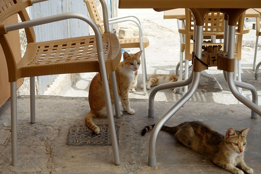 Que faire à Malte et Gozo