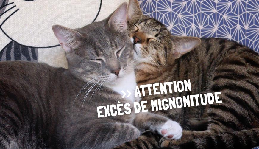 """Résultat de recherche d'images pour """"que du bonheur chat"""""""