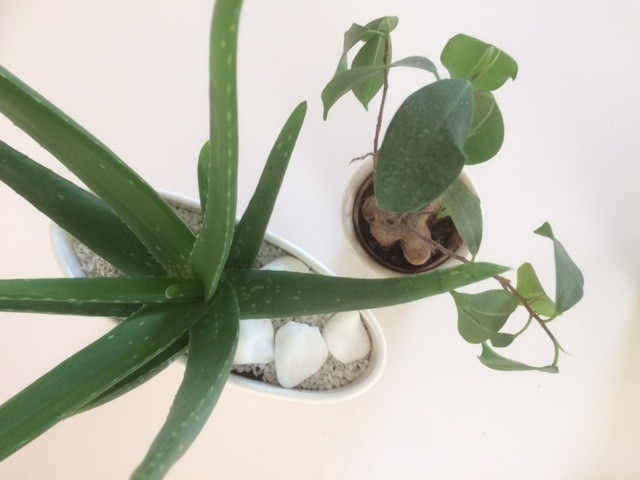 Vente plantes vertes lyon