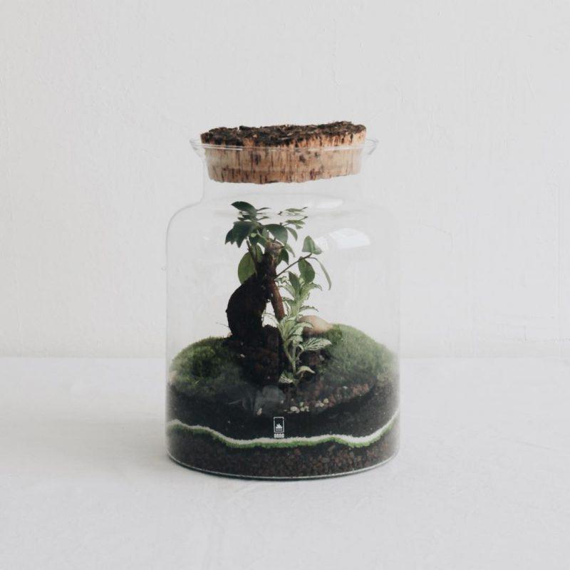 onno terrarium