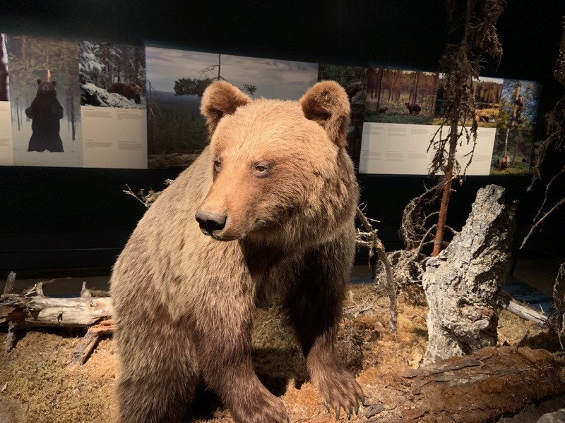 Ours Musée Rovaniemi