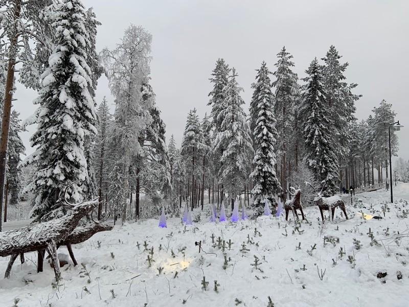 Neige en Laponie