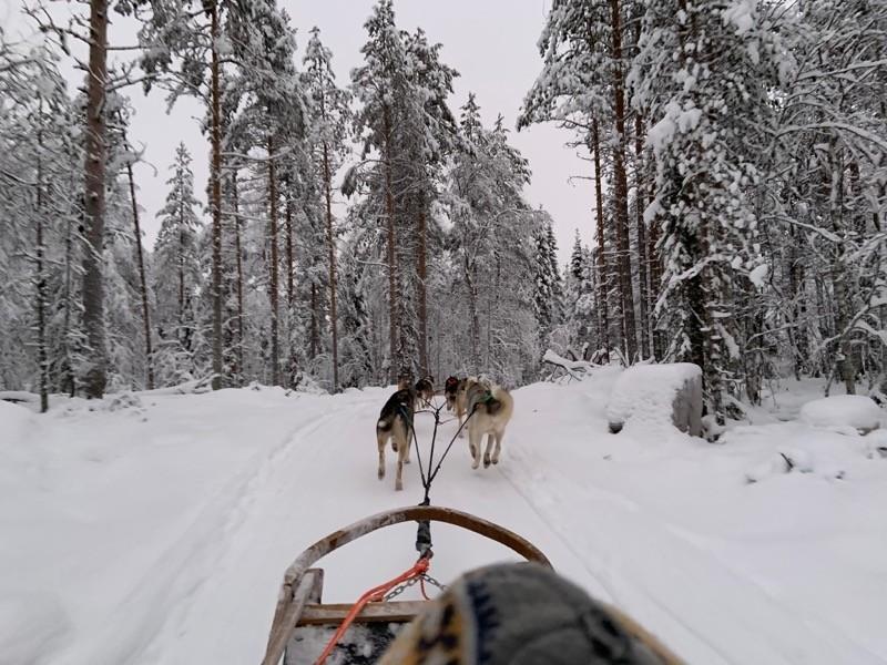 Faire du chien de traineaux en Laponie
