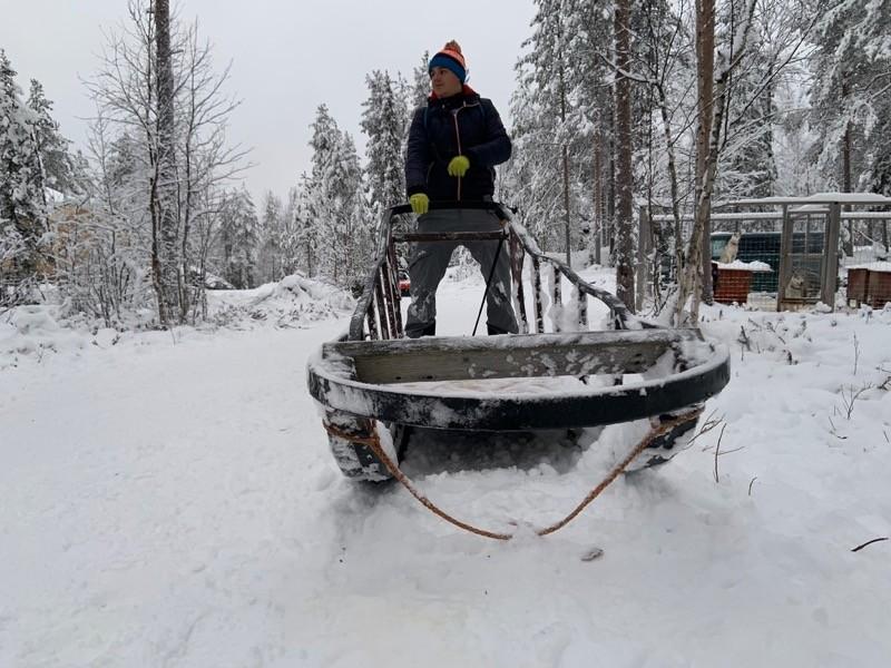 Chien de traineaux Laponie