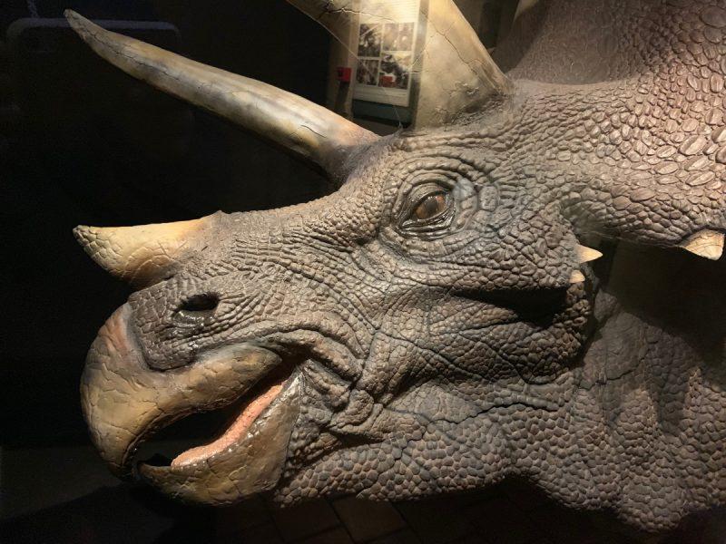 Triceratops Musée Cinéma Lyon