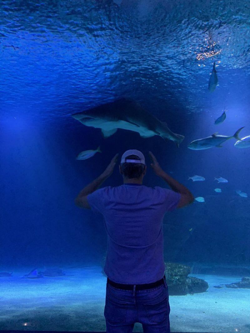 Aquarium Requin