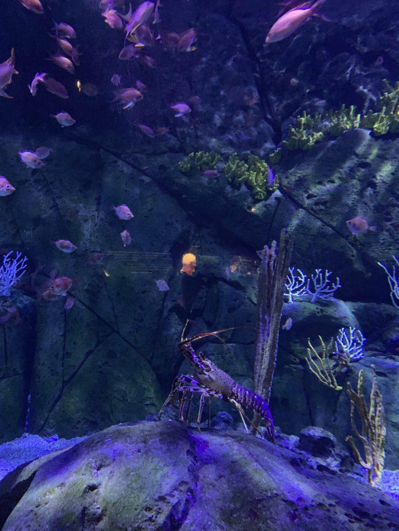 poissons à l'aquarium de Valence
