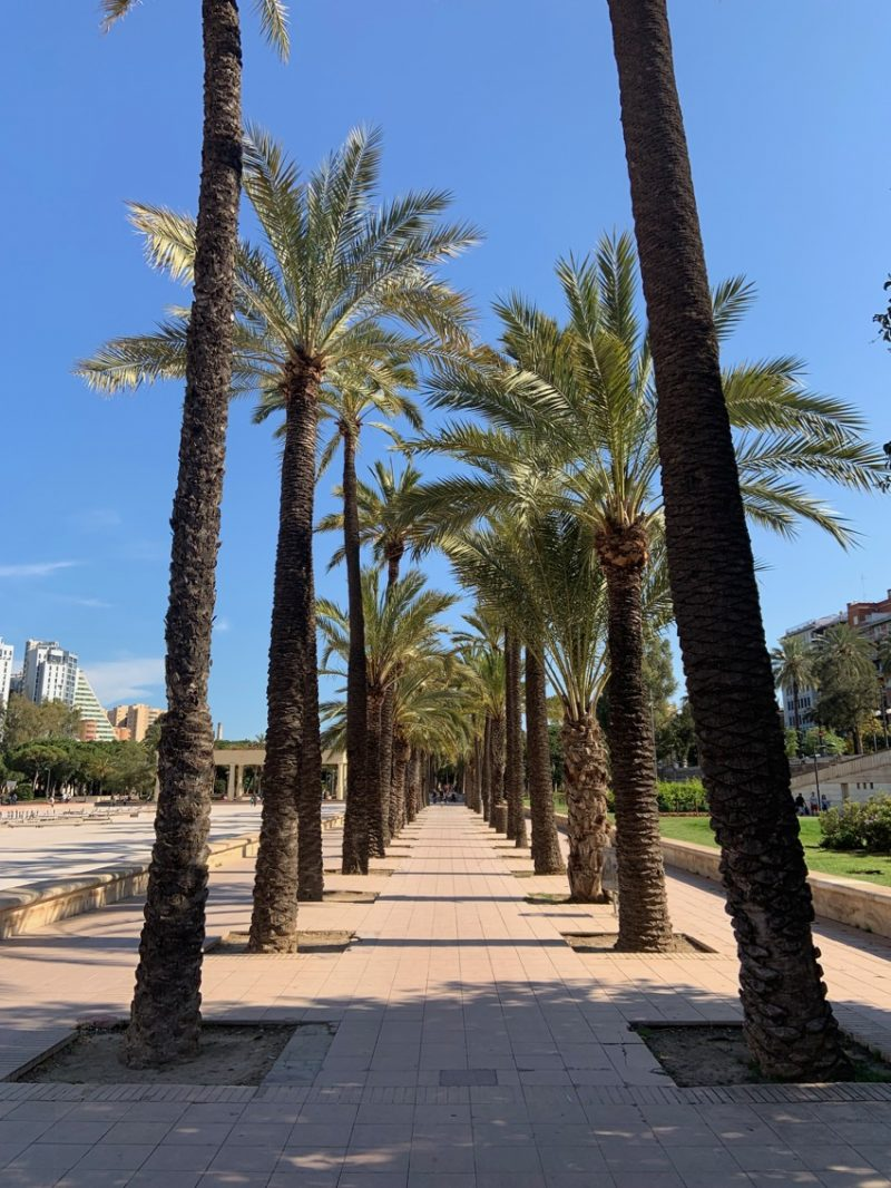 rangée de palmiers