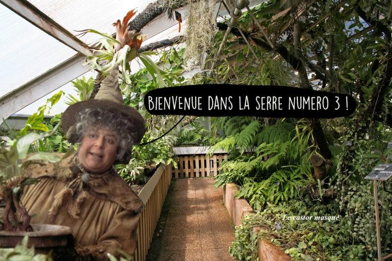 Madame Chourave Tête d'Or Lyon
