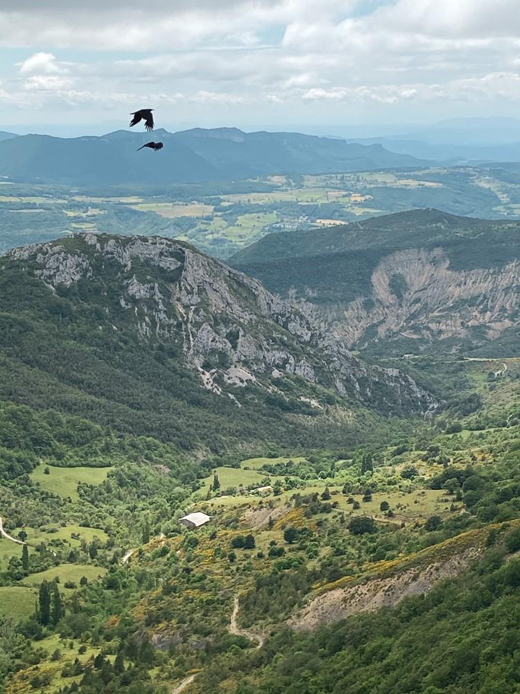 Vol oiseaux dans le Vercors